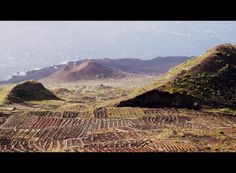 volcanic vineyard landscape in the south of the island