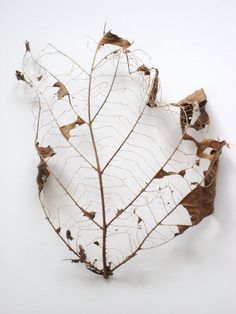 Best Photo Guide - Nature Photography Tips And Tricks That Really Work Decay Art, Leaf Skeleton, Growth And Decay, Nature Photography Tips, Ocean Photography, Photography Classes, Wedding Photography, E Mc2, Dry Leaf