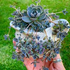 How To Raise Succulent Plants Which Is Not Easy To Die? - Latest Fashion Trends For Woman ~ zedd Beautiful Flowers, Plants, Planting Flowers, Garden Plants, Flowers, Succulents, Garden