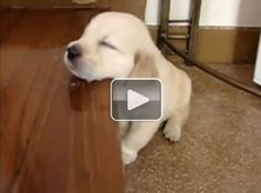 10 sleepy animals (Video) - This is WAY too cute not to post.