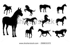 Horse Stock Photos, Images, & Pictures   Shutterstock