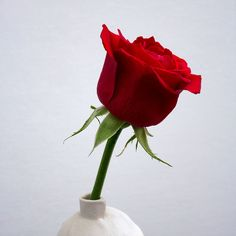Flowers Online - Same Day Flower Delivery! Order Flowers, Flowers Online, International Flower Delivery, Chinese Festival, Same Day Flower Delivery, Most Romantic, Red Roses, Bouquet, Plants