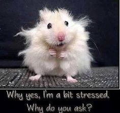 Why ye, I'm a bit stressed. Why do you ask?