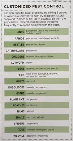 Ready for some garden solutions? There are lots of non-toxic pest control solutions with essential oils! Here's some helpful tips Slugs In Garden, Garden Insects, Garden Pests, Herbs Garden, Fruit Garden, Diy Pest Control, Pest Control Services, Bug Control, Oil City