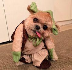 Marnie, the dog