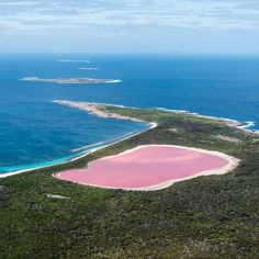 It has to be seen to believed but #LakeHillier in @australiasgoldenoutback is the real deal. Located on Middle Island near #Esperance it is otherwise known as the #PinkLake and can be seen by air with Esperance Air Charters. Great capture @lovethywalrus #thisisWA #westernaustralia #goldenoutback #WAnderlust #nature #beauty by westernaustralia