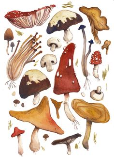 mushroom illustration | Tumblr