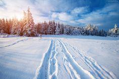 Zima, Śnieg, Las, Wschód słońca