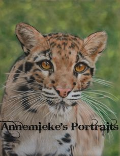 Clouded leopard, coloured pencils on suede board, reference Morguefiles