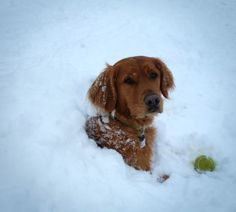 Today is #FridayFunday! If you're currently surrounded by snow, why not take a furry friend out for some fetch with snow balls? This pup is definitely making the most of it! Thanks to Dmitri Vitergar, Fisheries Biologist at the Snake River Area Office for this photo.
