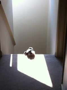On the sunny stair