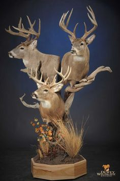 Taxidermy Decor, Taxidermy Display, Deer Mounts, Pedestal, Outdoor Living, Hunting, Fishing, Wildlife, Cabin