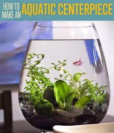 How To Make A Small BETA Fish Aquarium   Use a Small Fish Tank Aquarium to Create a Unique Centerpiece for the Home