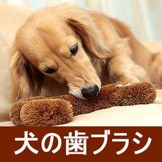 Qoo10 | [ONE BRUSH犬の歯ブラシ]犬、おもちゃ、おやつ、ブラシ、猫、ペット、トイプードル、おもちゃ : ペット用品