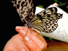 Beautiful Butterflu New Hobbies, Butterfly, Princess, Pictures, Photography, Beautiful, Photos, Photograph, Fotografie