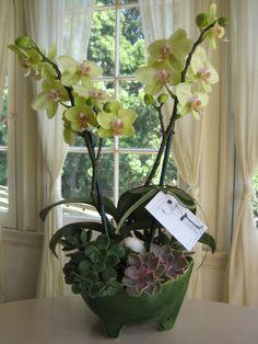 Orchid succulent gift arrangement in vintage pot.