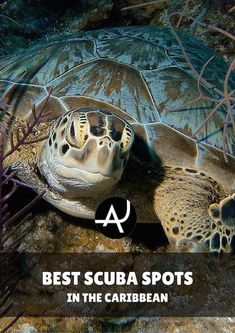 Top 10 Best Scuba Diving in the Caribbean - Best Scuba Diving Destinations - Diving Bucket List - Adventure Vacations - Beautiful Locations and Places to Dive via @theadventurejunkies #scubadivingtrippackinglist #scubadivinglocations