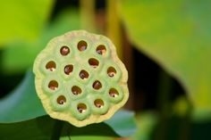 7 Best My Fear As Stupid As It Seems I Get Sick Looking At This Images Trypophobia Phobias Fear