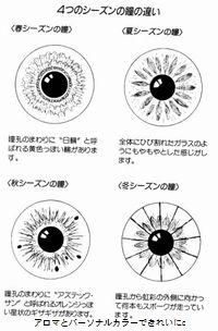 アロマとパーソナルカラーできれいに:目の模様