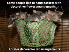 Rat arrangement in a hanging basket Funny Rats, Cute Rats, Rats Mignon, Rat Care, Funny Animals, Cute Animals, Animal Memes, Les Rats, Rodents