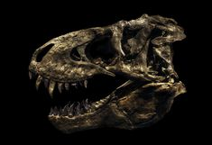 Christian Voigt used analog and digital trickery to isolate individual dinosaurs from larger exhibitions. Dinosaur Museum, Dinosaur Fossils, Tigers Live, Field Museum, Dinosaur Skeleton, Moon Photography, Extinct Animals, Tyrannosaurus Rex, History Museum