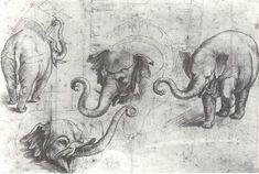 Elefante oferecido ao papa Leão X por Dom Manuel I. Apontamento do pintor Rafael Sanzio. Museu Ashmolean, Oxford.