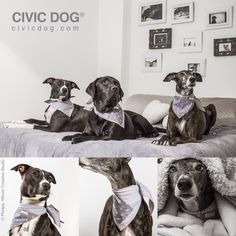 Be nice, be gentle, be Civic... Be a Civic Dog, by O Clube da Tula. Shop online at civicdog.com