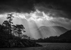 Those Trees Mark Littlejohn - Flickr