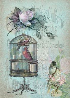 Romantic image, vintage, birds, roses, birdcage