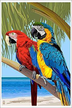 Parrots (12x18 Art Print, Wall Decor Poster) Lantern Press http://www.amazon.com/dp/B00N5CTGZK/ref=cm_sw_r_pi_dp_sCd9vb0HB9ST8