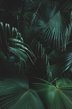 Image uploaded by dαydreαming. Find images and videos about nature, green and tropical on We Heart It - the app to get lost in what you love. Plant Wallpaper, Green Wallpaper, Trendy Wallpaper, Dark Green Aesthetic, Plant Aesthetic, Tropical Vibes, Tropical Plants, Tropical Leaves, Green Life