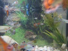 Akvaarium www.veeseire.ee