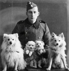 Military Man and Spitz dogs Spitz Pomeranian, Pomeranians, Chihuahuas, Pugs, Funny Dogs, Cute Dogs, Outdoor Dog Toys, Spitz Dogs, Puppy Drawing