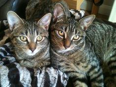 Jasmine (left) Kipling (right)