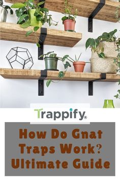 How do gnat traps work? In this article, we'll review the best gnat traps you can use in your house and how they work. Hop on to find new ways to fight the pesky invaders! Gnat Traps, Fly Traps, Indoor Vegetable Gardening, Organic Gardening Tips, Hanging Plants, Indoor Plants, Rotten Fruit, Fruit Flies, Pest Control