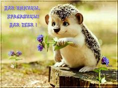 Az okos, szépség! Cute Hedgehog, New Years Eve Party, Good Morning, Photo Art, Rabbit, Italian Language, Hedgehogs, Facebook, Sayings