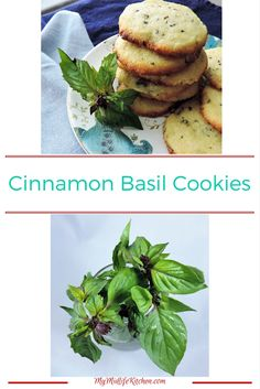 Cinnamon Basil Cookies- make again with better shortbread recipe, add lime and basil. Basil Recipes, Herb Recipes, Sweet Recipes, Healthy Recipes, Cinnamon Basil, Basil Tea, Cookie Recipes, Dessert Recipes, Pineapple Sage