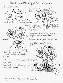 How to Draw Worksheets for The Young Artist: How To Draw Black Eyed Susan Flowers, Free Worksheet