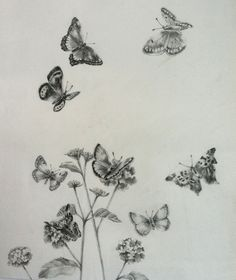 Pencil Drawings of Butterflies | Anne E May Impressions: Butterflies with flowers pencil drawing