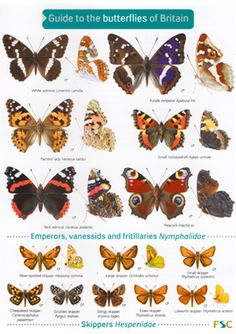 British Butterflies - A Photographic Guide by Steven Cheshire
