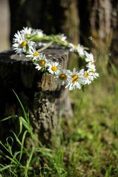 Corona de Margaritas / flor muy sencilla y muy bella.
