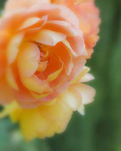 Pretty blure (_MG_6985b) by Sisko1235711 on Flickr.