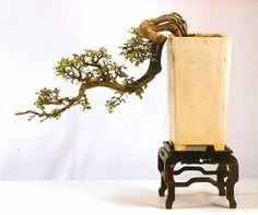 Yee-sun Wu cascade chinese elm