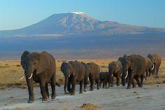 Amboseli National Park  Top 10 Places to visit in Kenya #kenyaisbeautiful