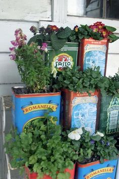 Olive oil containers for herbs and edible flowers