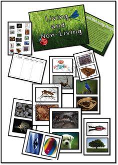"""Living & Non-Living Things"" Flashcards (from ""Just Teach"" Shop  