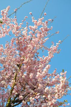 Aesthetic Pastel Wallpaper, Aesthetic Backgrounds, Aesthetic Wallpapers, Pastel Photography, Nature Photography, Almond Blossom, Cherry Blossom, Rose Namajunas, Dark Purple Flowers