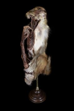 Mummified Monkey. Prepared by Ryan Matthew. Photo by Sergio Royzen.