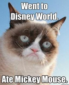 Everytime I see grumpy cat memes, I laugh hysterically. I need humor in my life sometimes. It keeps from taking everything in life way too seriously. Grumpy Cat Quotes, Funny Grumpy Cat Memes, Funny Cats, Funny Jokes, Grumpy Kitty, Cat Jokes, Kitty Kitty, Grumpy Cat Disney, Happy Kitty