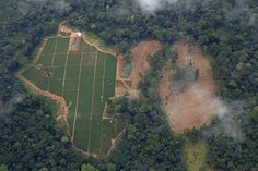 ACT: Tell authorities to seize illegal rainforest timber about to leave Cameroon